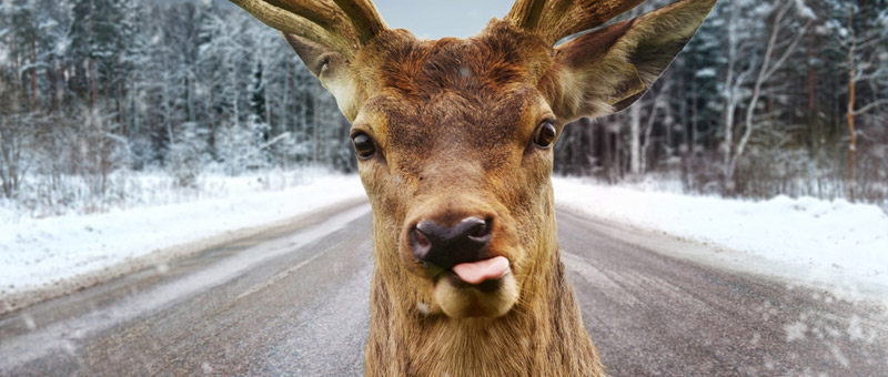 mediaprep-no-one-wants-deer-headlights